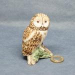 Owl - Barn Owl