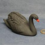 S079 - Black Swan