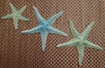 Starfish Various